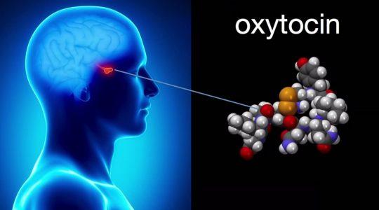 Oxitocina - efecte negative